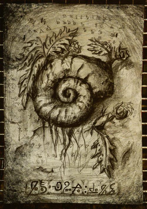ammonite_sita